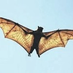 Bats keep insects under control
