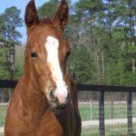 Eastern Equine Encephalitis spreading across state