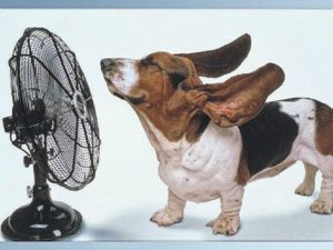 Heat harmful to pets