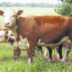 Grass fungus could cause $1 billion in annual livestock production losses