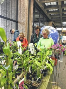 Orchid Show attracts crowds to World of Energy