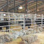 2017 Clemson Extension Bull Test and Heifer Sale best ever